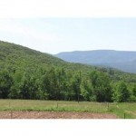 83-Hunterfeld-Rd-Prattsville-field-views