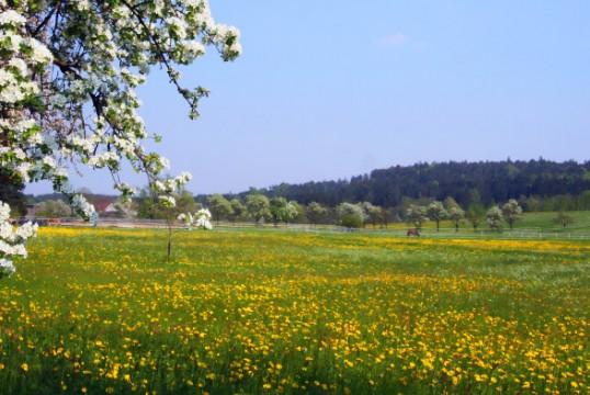 fieldDogwood