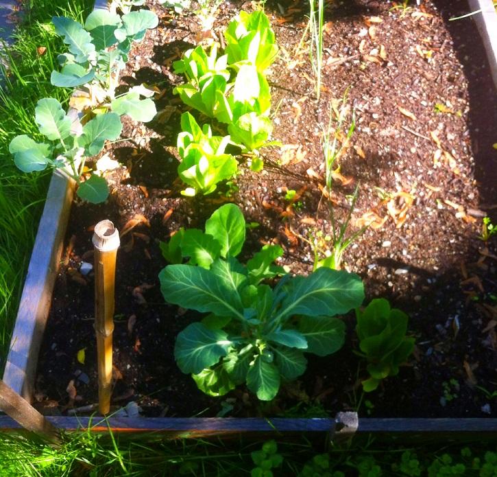 Adams Fairacre Farms Garden Center Your Source For All