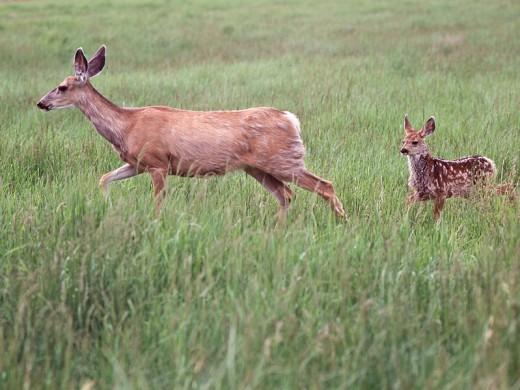 Deer_family_(7978154208)