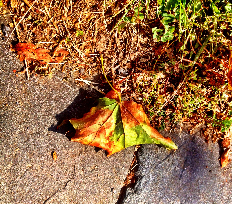 Catskills NY fall foliage