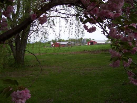 Northwind Farms2