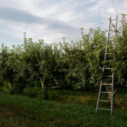 apple season dutchess county