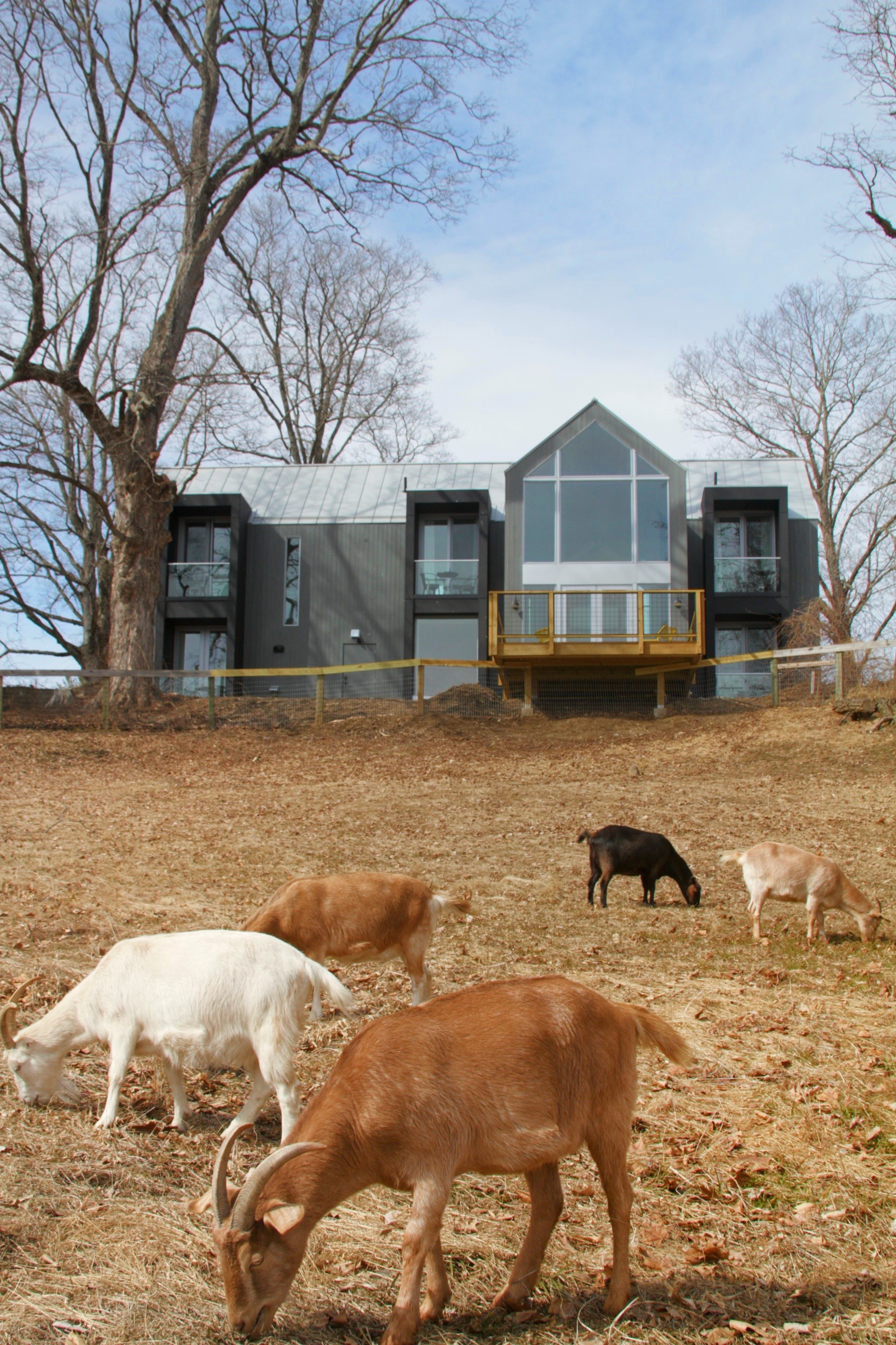 The Gray Barn at Woodstock Animal Sanctuary Offers Furry